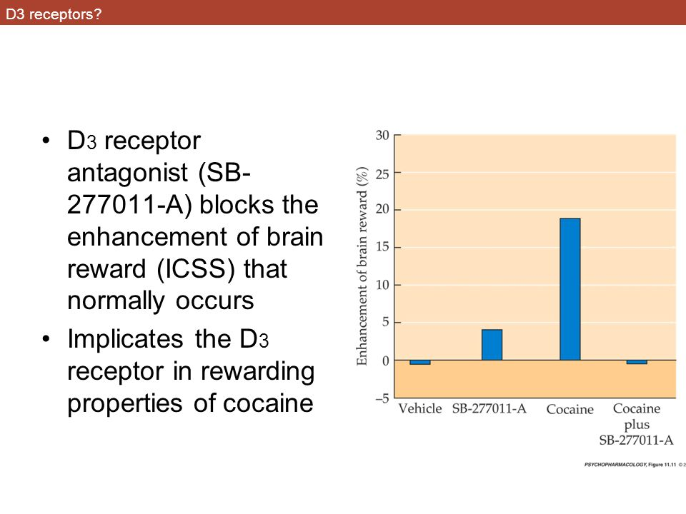 Implicates the D3 receptor in rewarding properties of cocaine