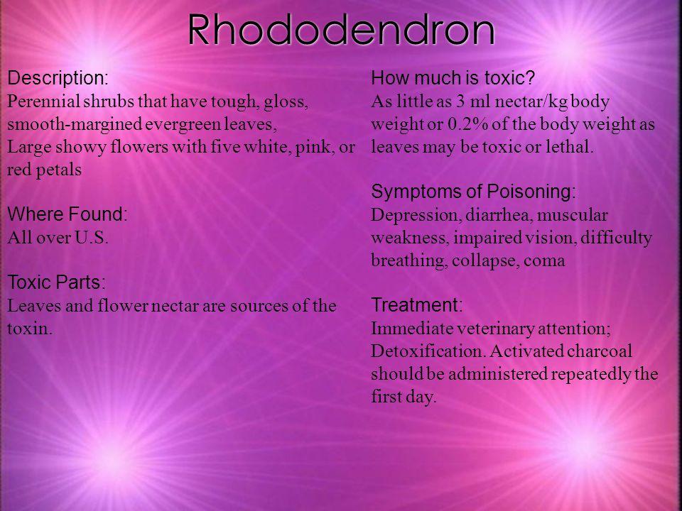 Rhododendron Description: