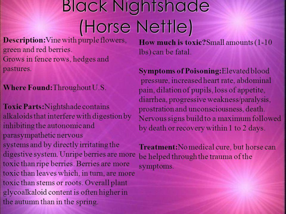 Black Nightshade (Horse Nettle)