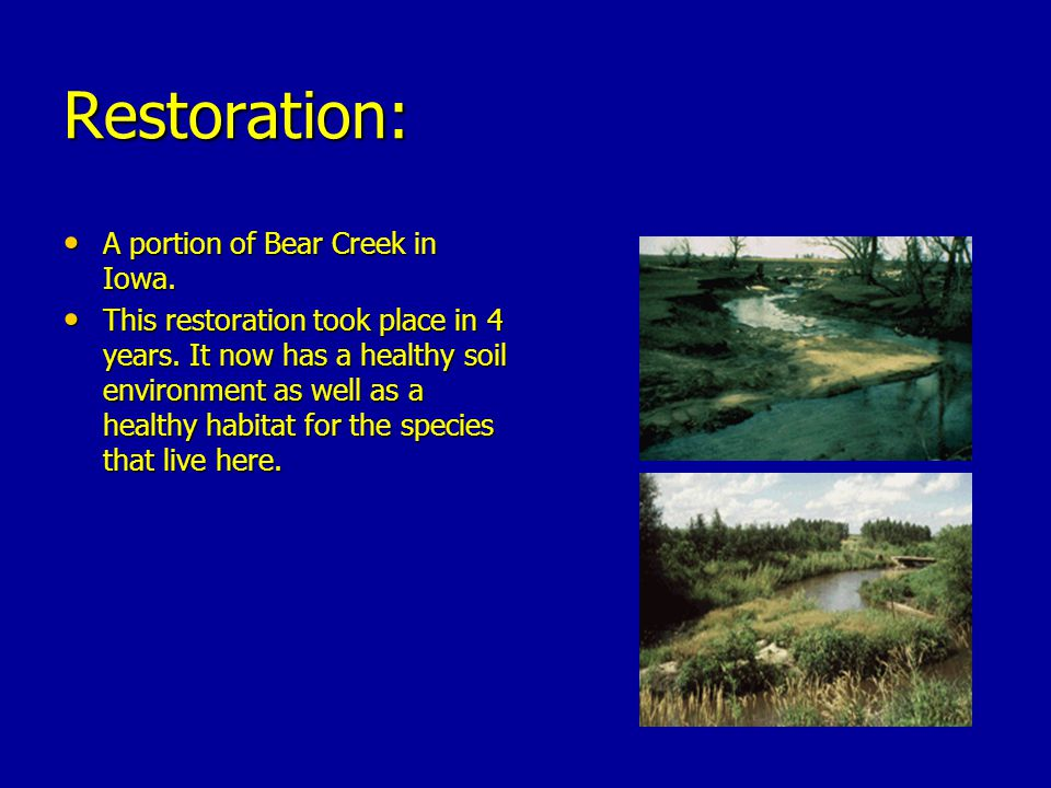 Restoration: A portion of Bear Creek in Iowa.