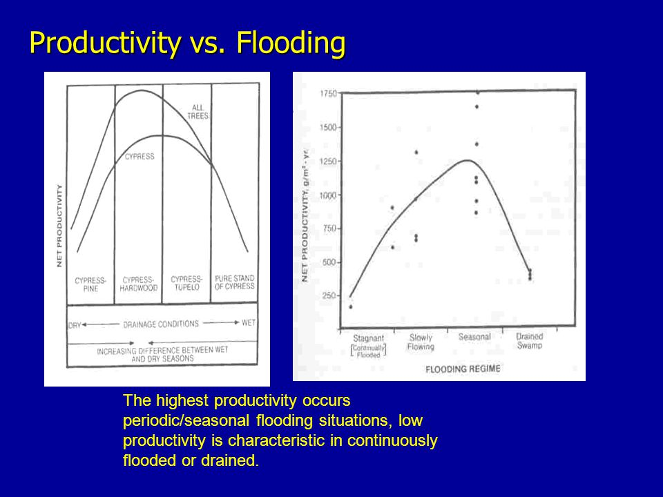 Productivity vs. Flooding