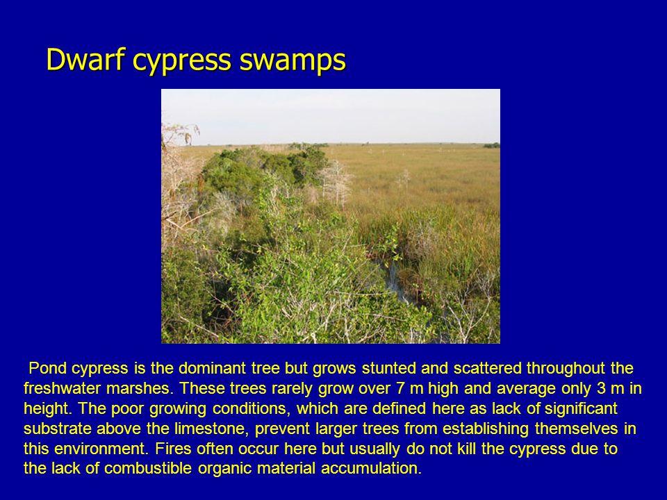 Dwarf cypress swamps