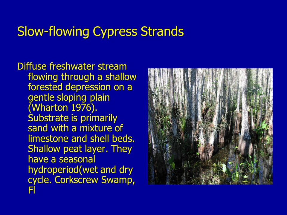 Slow-flowing Cypress Strands