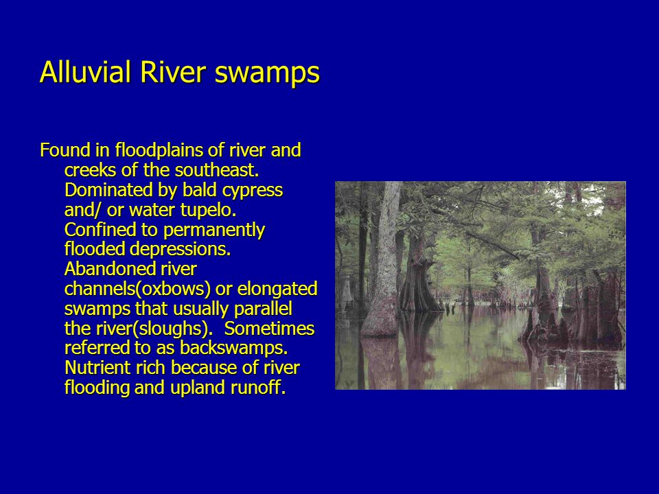 Alluvial River swamps