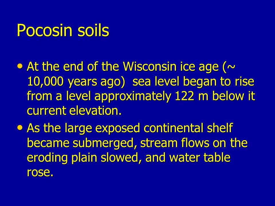 Pocosin soils