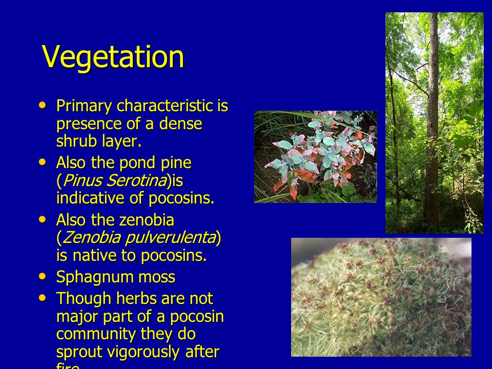 Vegetation Primary characteristic is presence of a dense shrub layer.