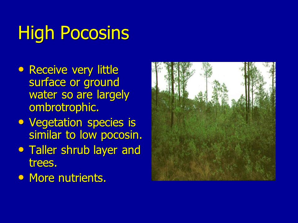 High Pocosins Receive very little surface or ground water so are largely ombrotrophic. Vegetation species is similar to low pocosin.