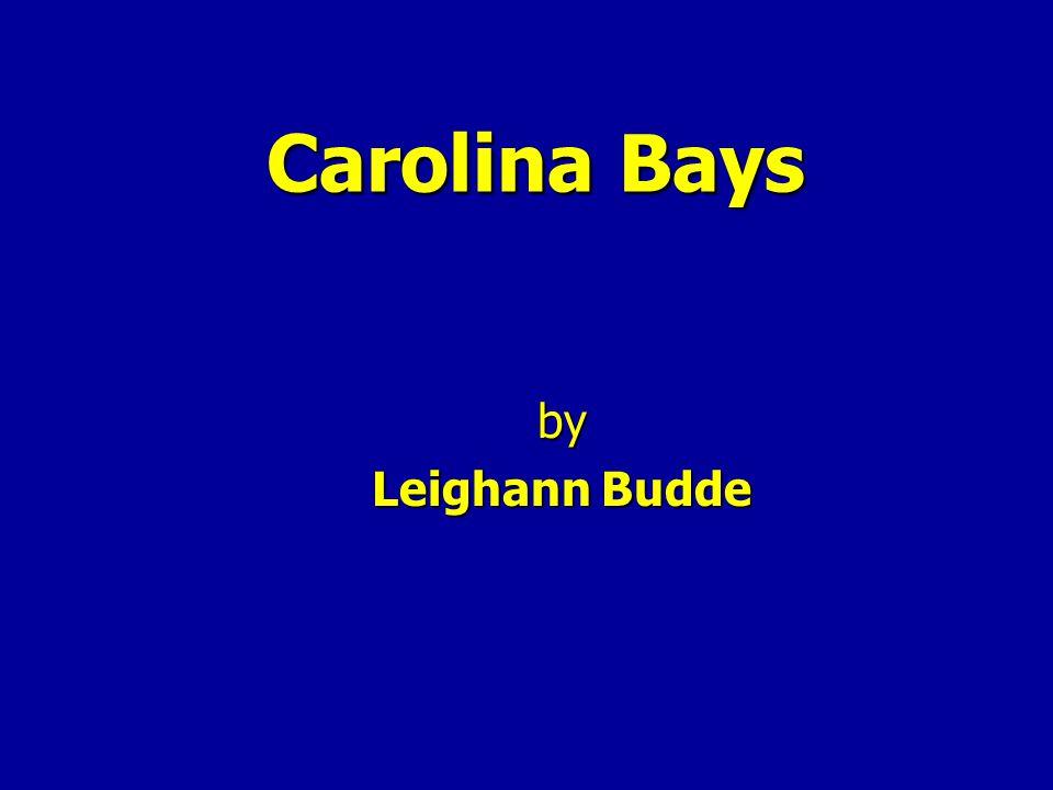 Carolina Bays by Leighann Budde