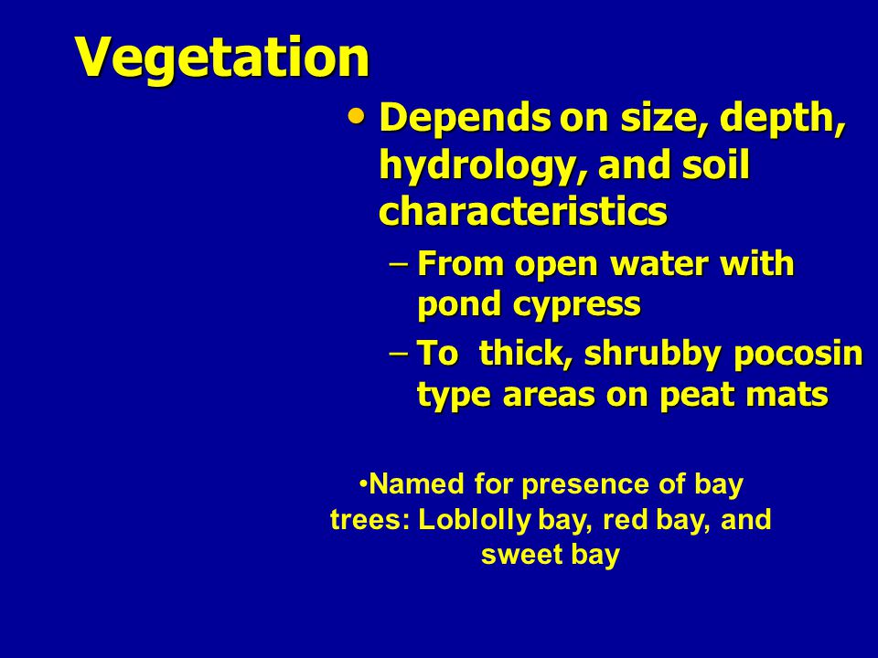 Named for presence of bay trees: Loblolly bay, red bay, and sweet bay