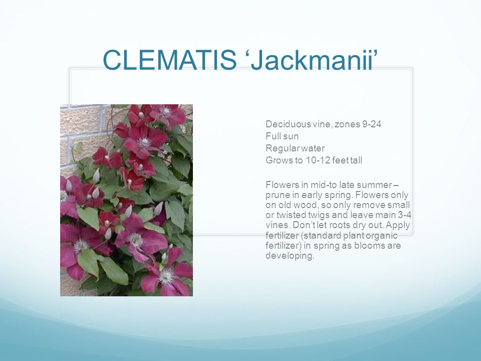 CLEMATIS 'Jackmanii' Deciduous vine, zones 9-24 Full sun Regular water