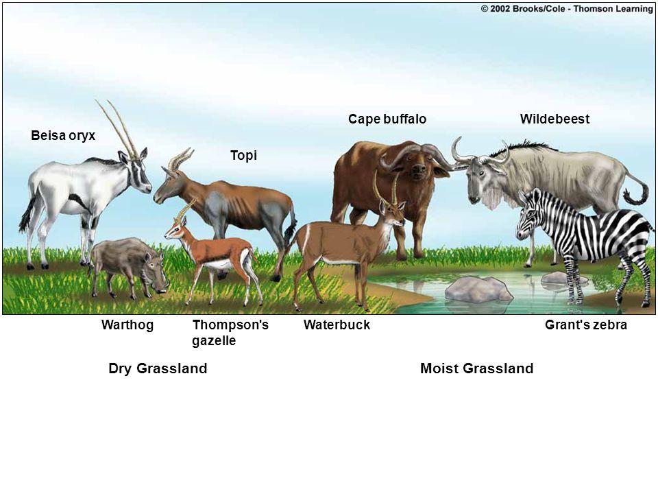 Dry Grassland Moist Grassland