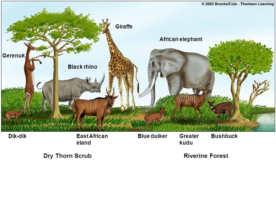 Dry Thorn Scrub Riverine Forest