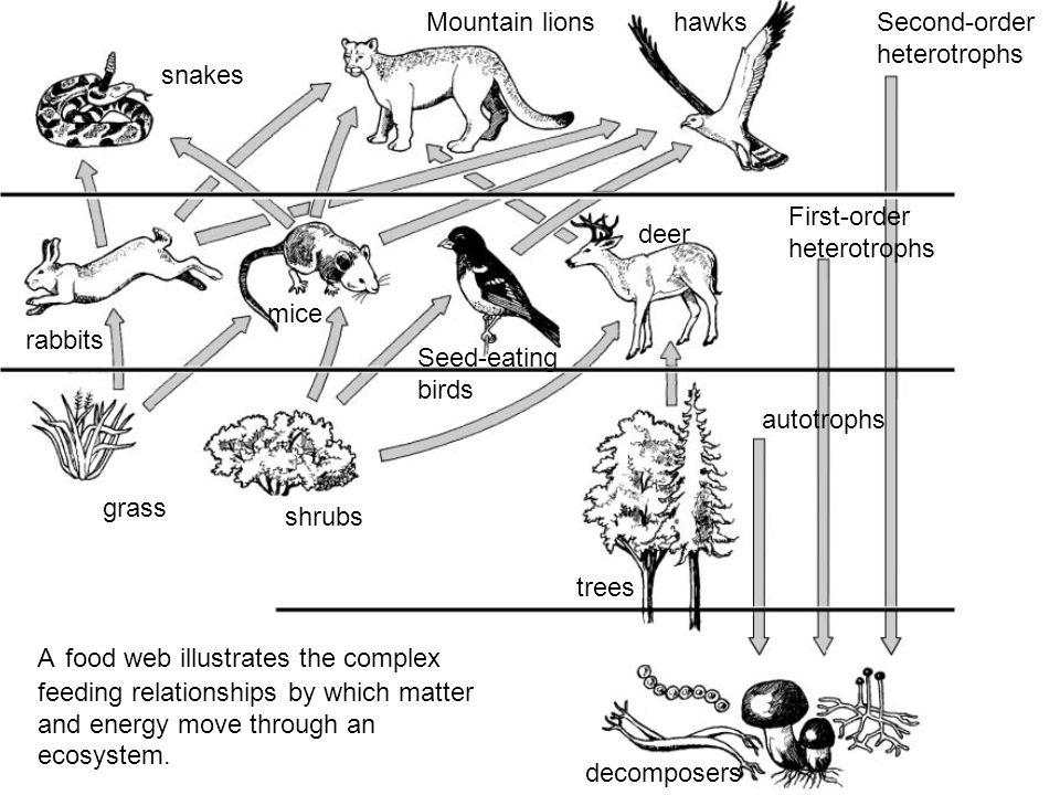 Second-order heterotrophs