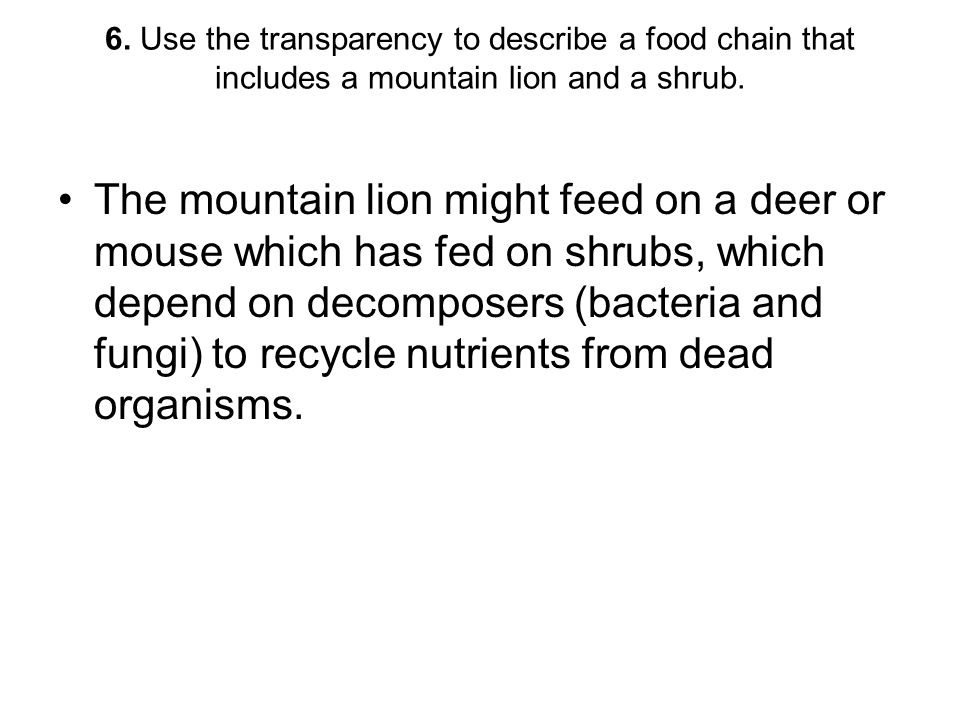 6. Use the transparency to describe a food chain that includes a mountain lion and a shrub.