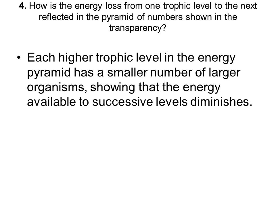4. How is the energy loss from one trophic level to the next reflected in the pyramid of numbers shown in the transparency