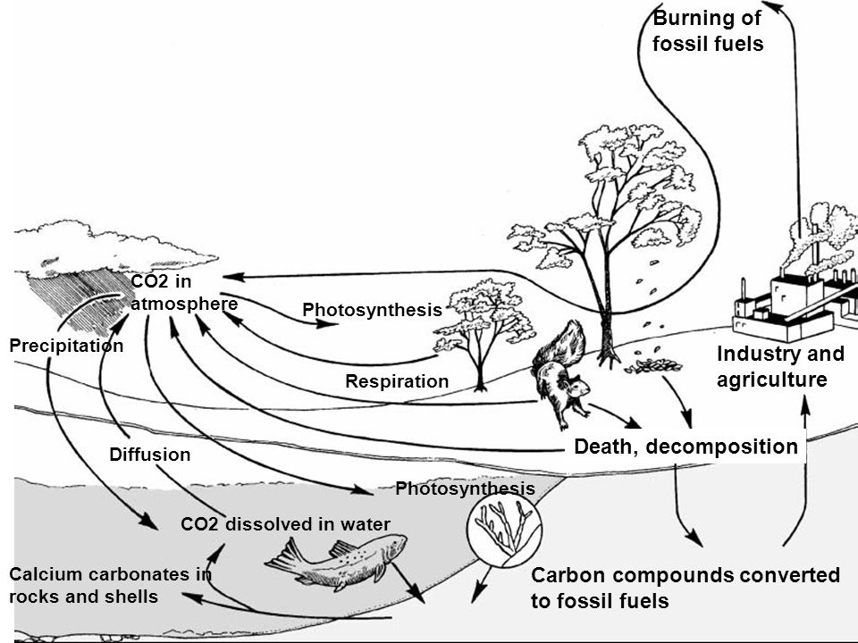 Carbon compounds converted to fossil fuels