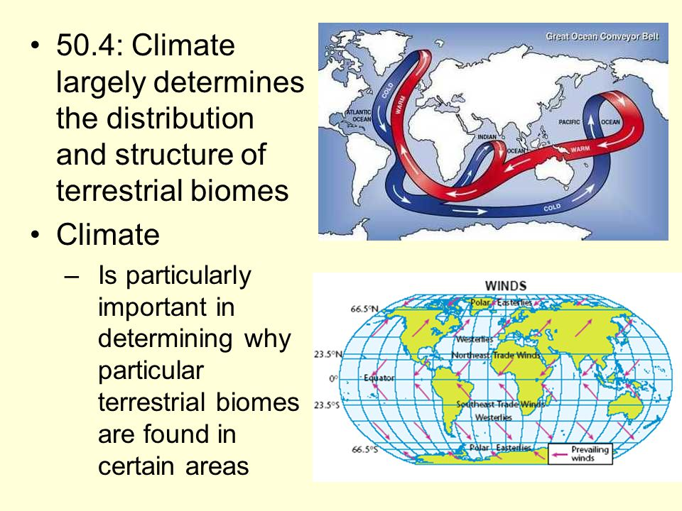 50.4: Climate largely determines the distribution and structure of terrestrial biomes