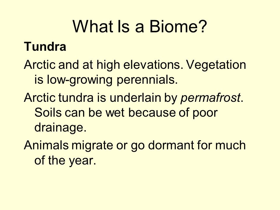 What Is a Biome Tundra. Arctic and at high elevations. Vegetation is low-growing perennials.