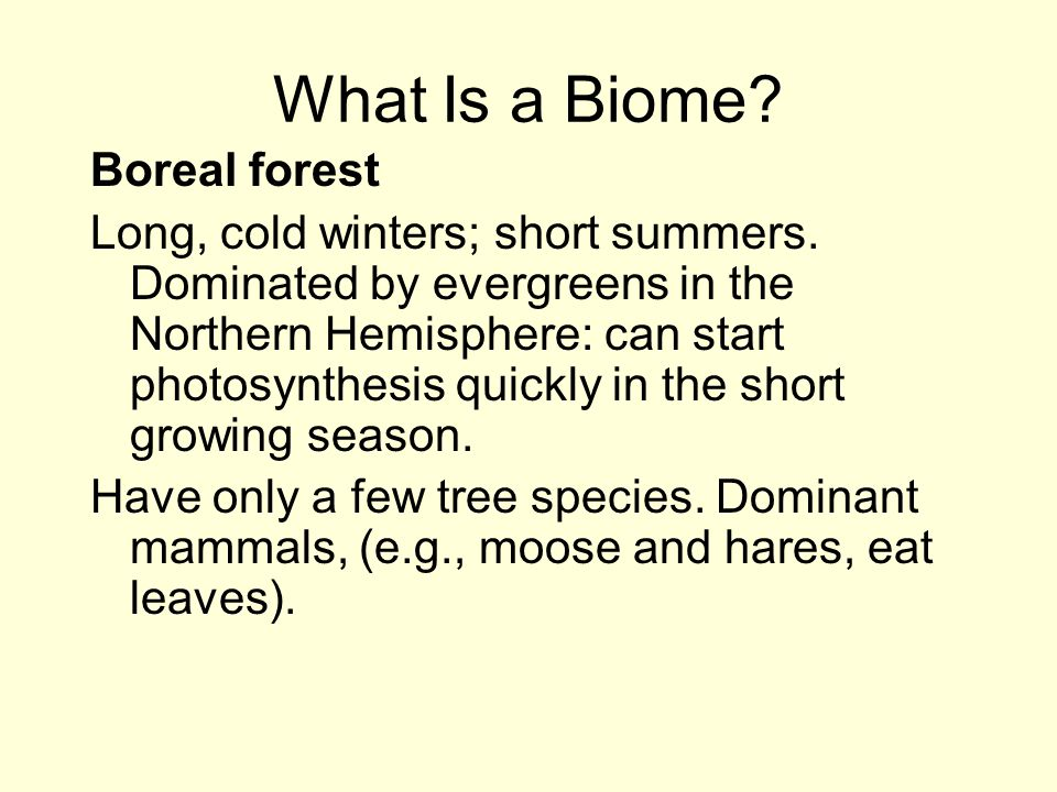 What Is a Biome Boreal forest