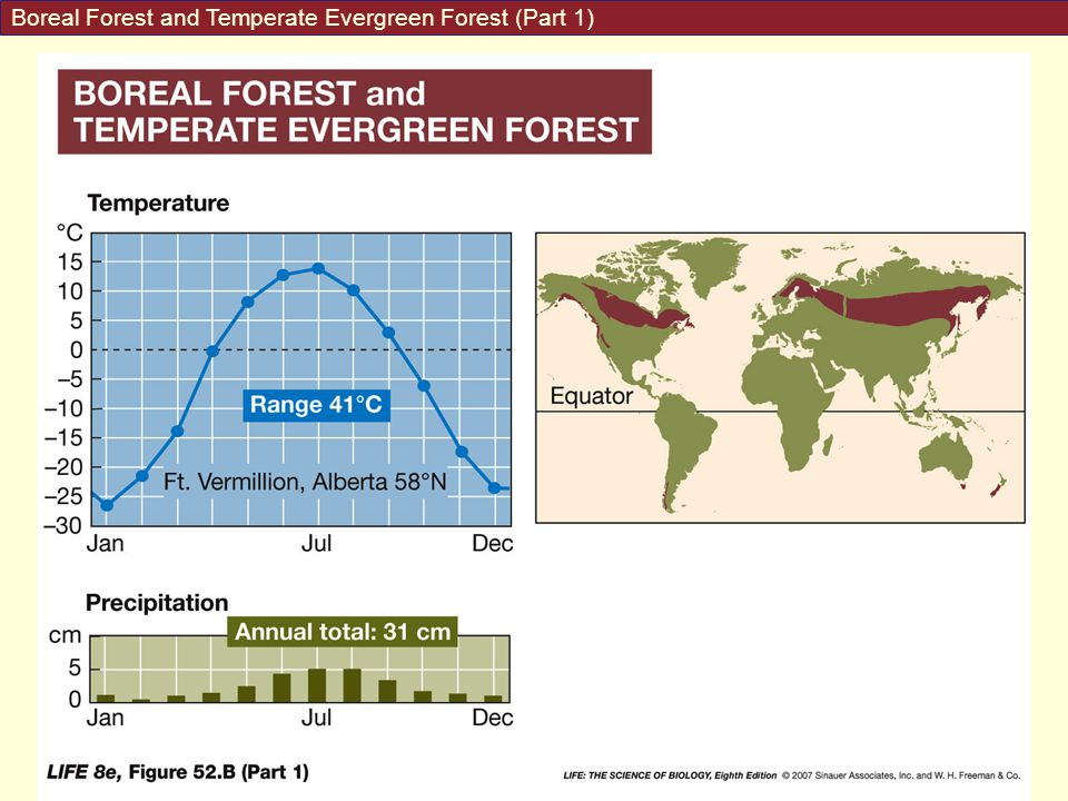 Boreal Forest and Temperate Evergreen Forest (Part 1)