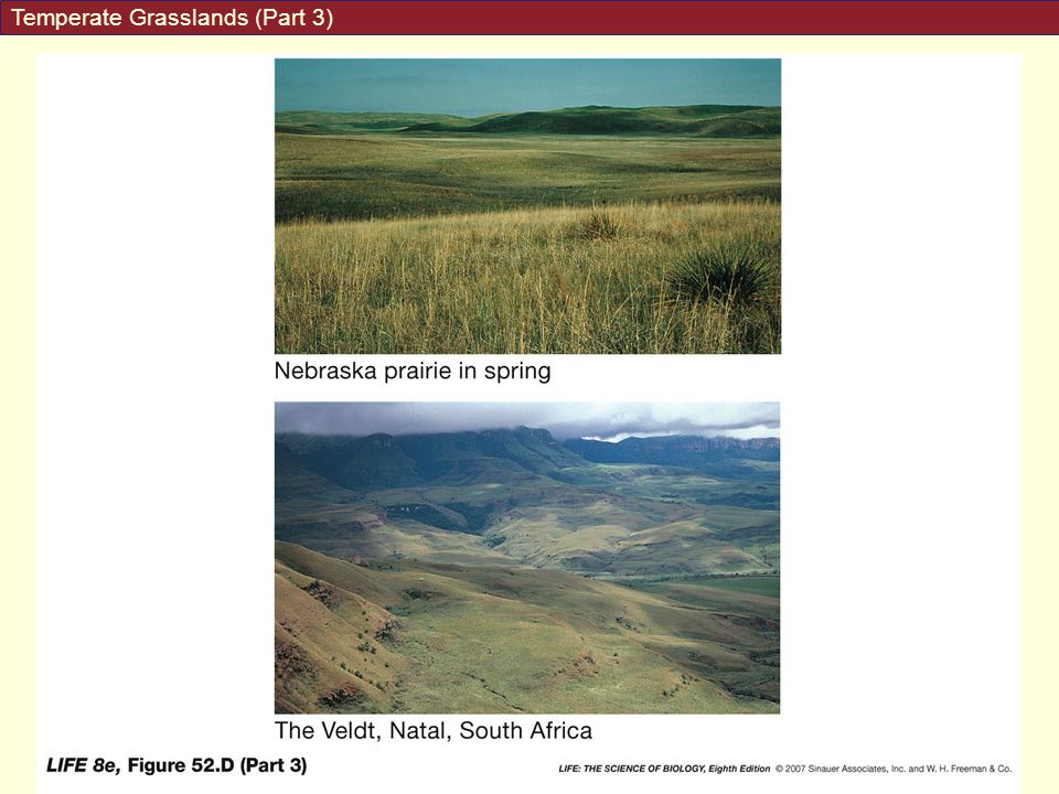 Temperate Grasslands (Part 3)