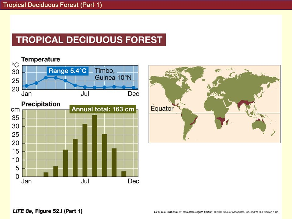 Tropical Deciduous Forest (Part 1)