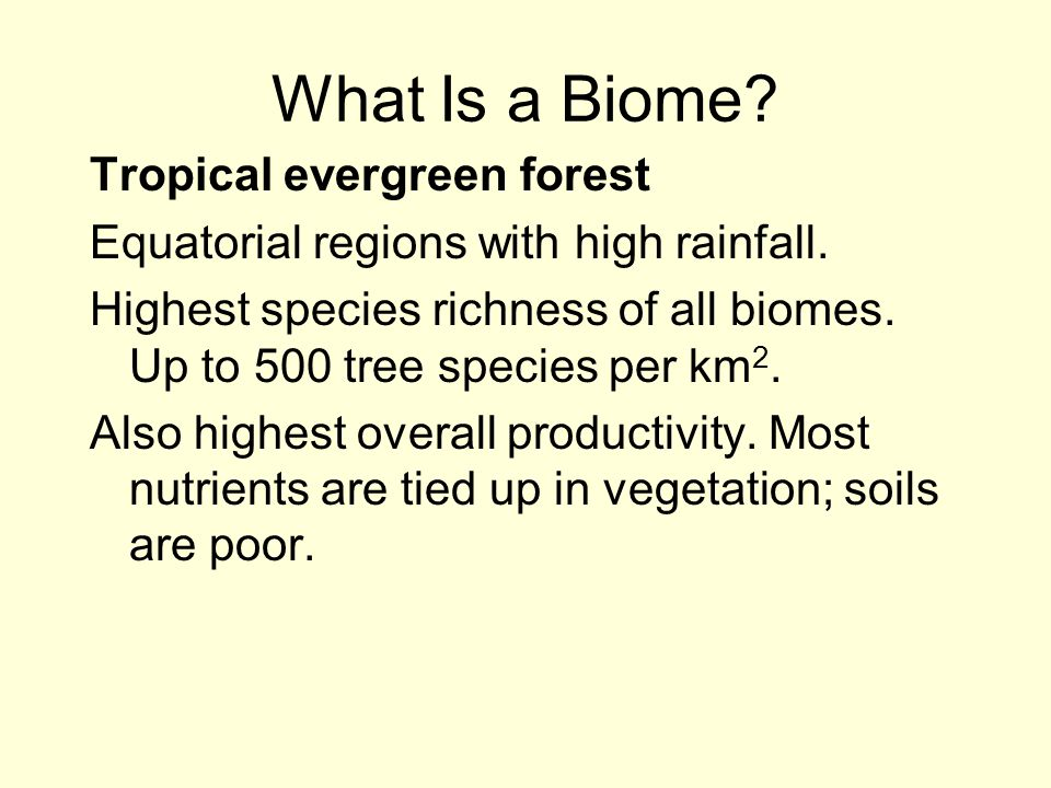 What Is a Biome Tropical evergreen forest