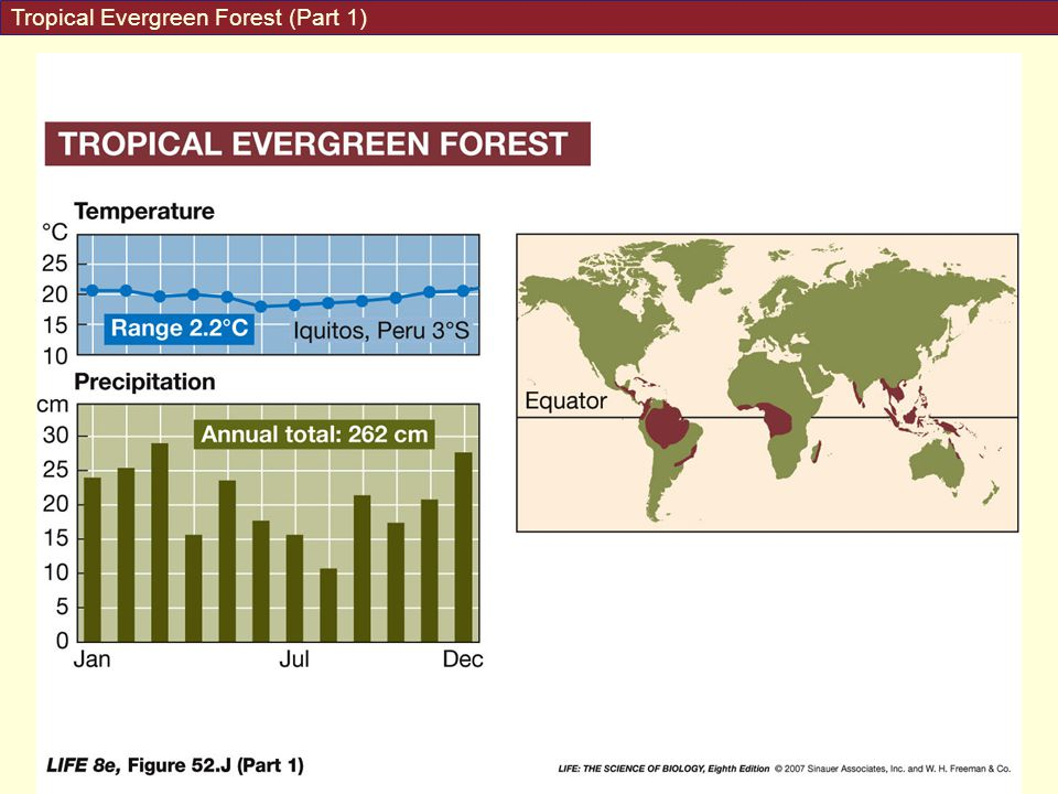 Tropical Evergreen Forest (Part 1)
