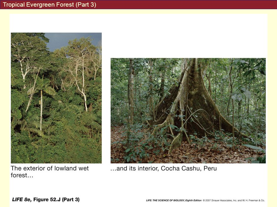 Tropical Evergreen Forest (Part 3)