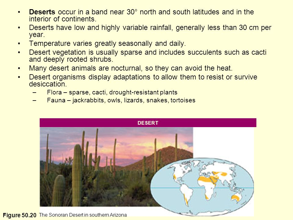 The Sonoran Desert in southern Arizona