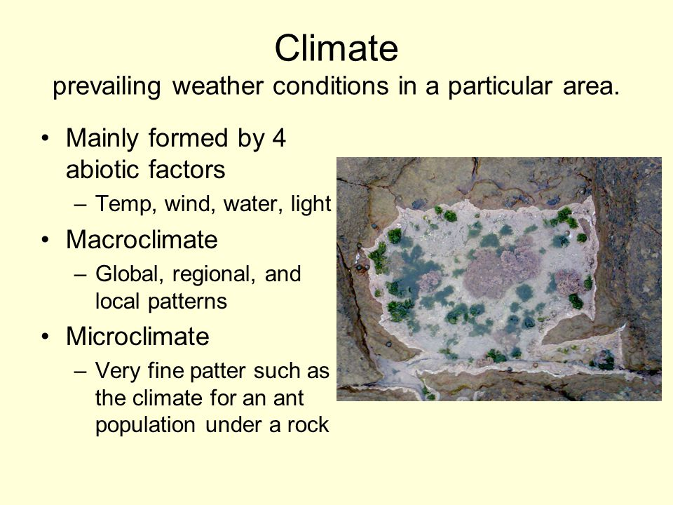 Climate prevailing weather conditions in a particular area.
