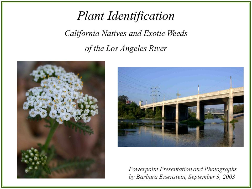 Plant Identification California Natives and Exotic Weeds