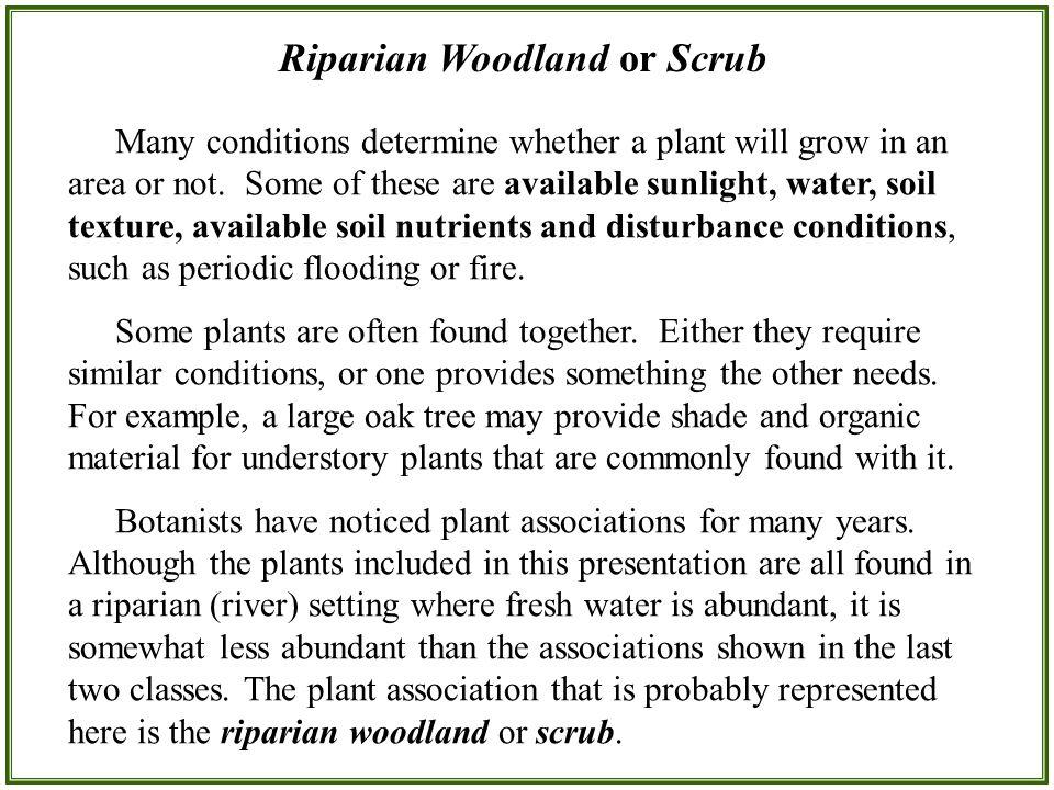 Riparian Woodland or Scrub