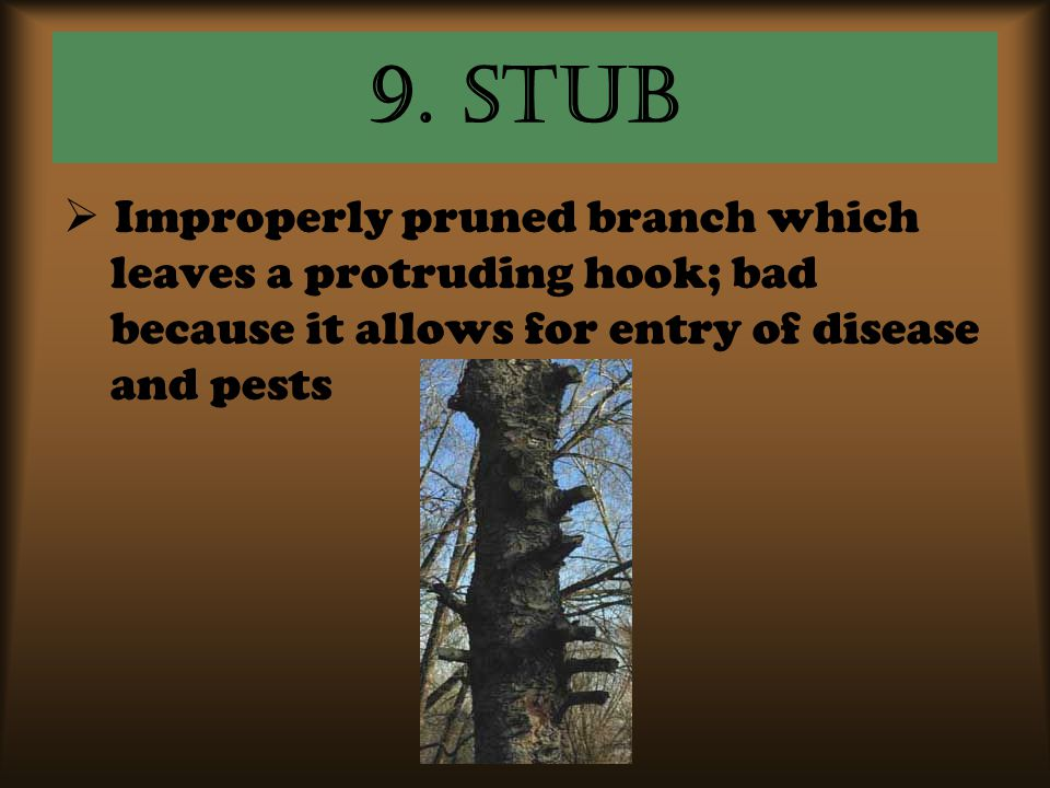 9. Stub Improperly pruned branch which leaves a protruding hook; bad