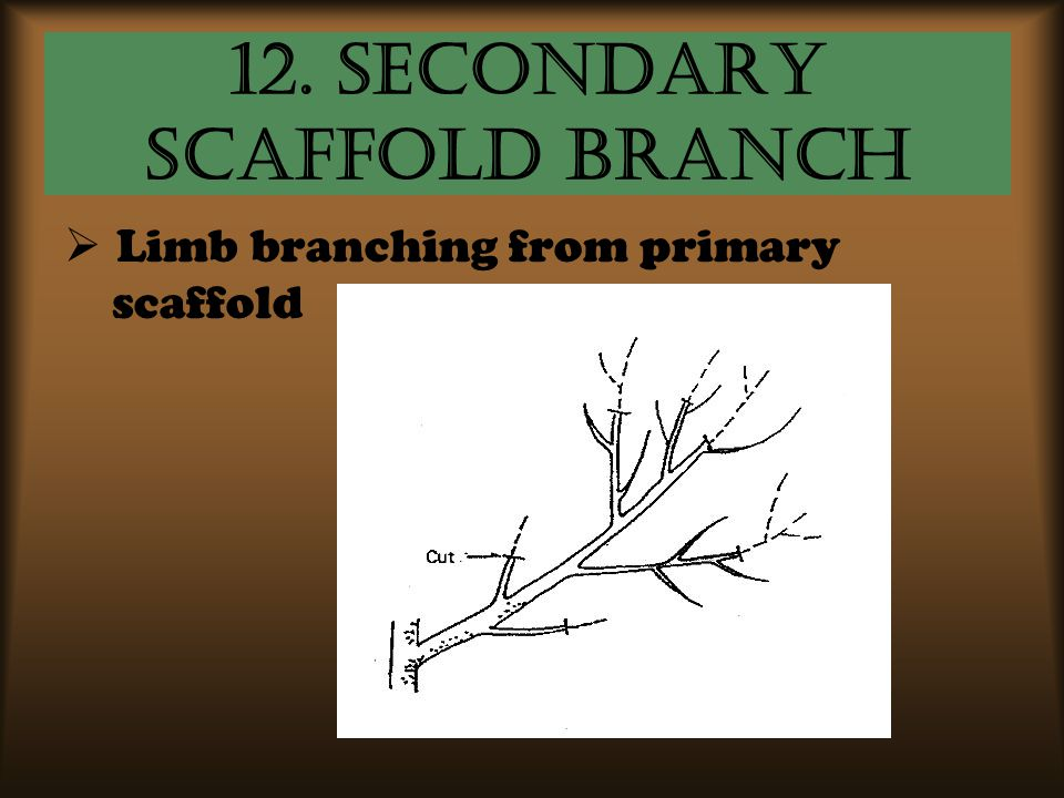 12. Secondary Scaffold Branch