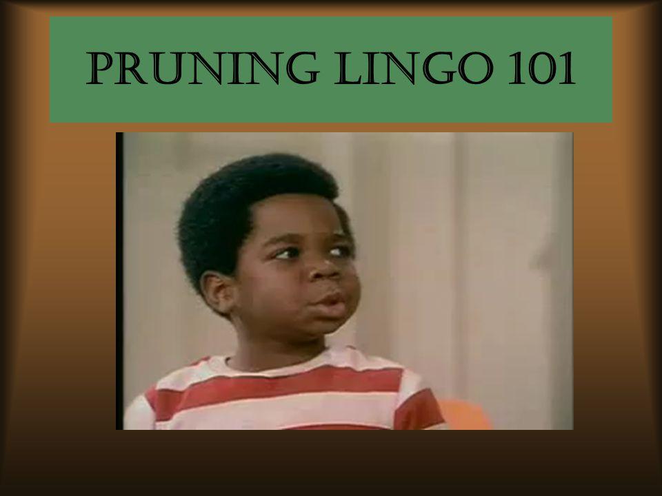 Pruning lingo 101