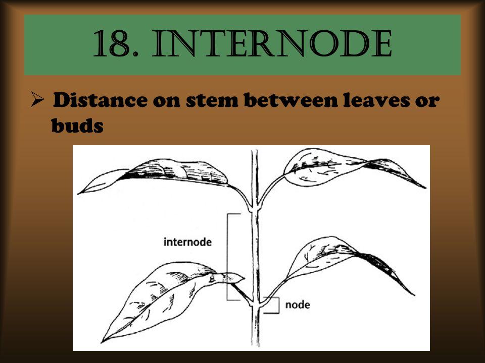 18. internode Distance on stem between leaves or buds