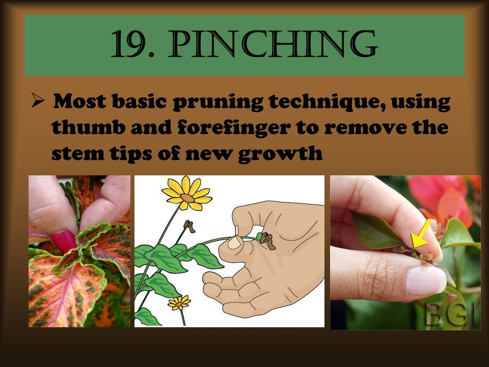 19. pinching Most basic pruning technique, using