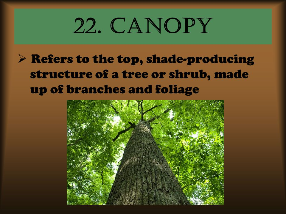 22. canopy Refers to the top, shade-producing