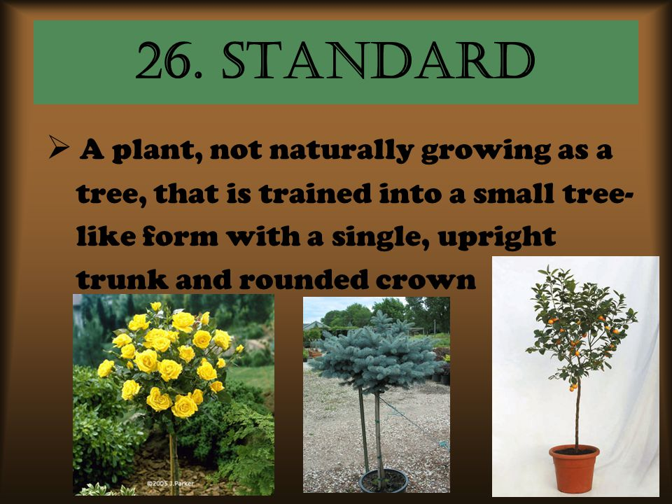 26. standard A plant, not naturally growing as a