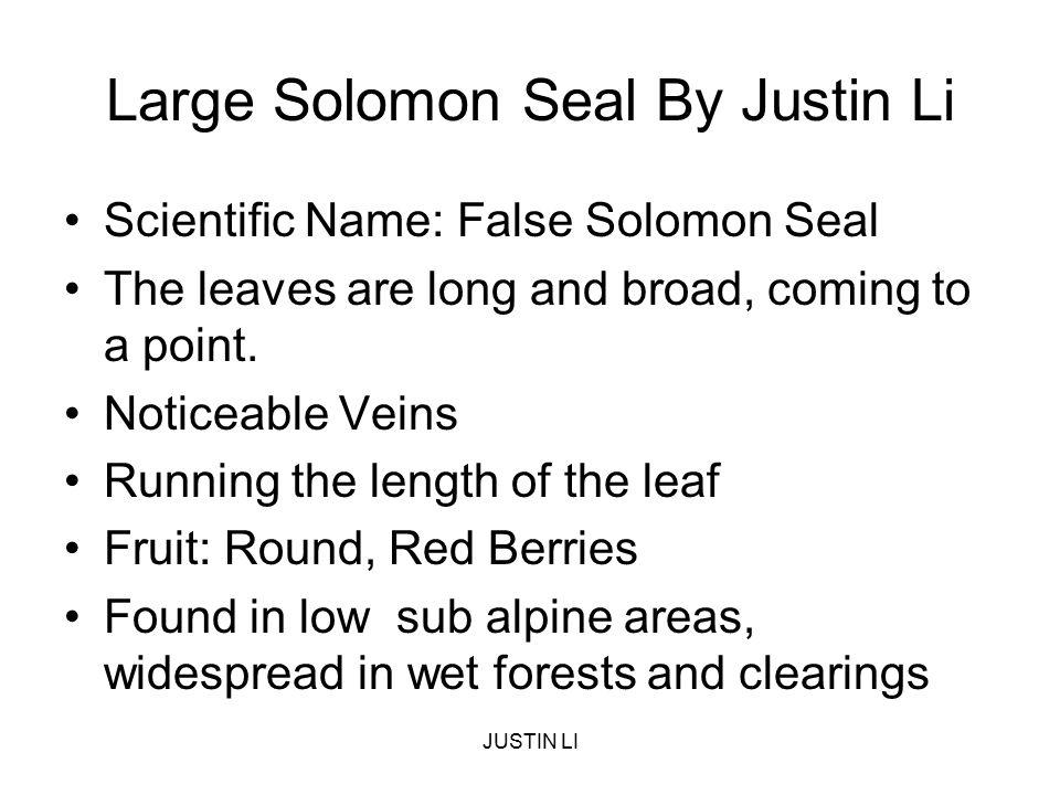 Large Solomon Seal By Justin Li