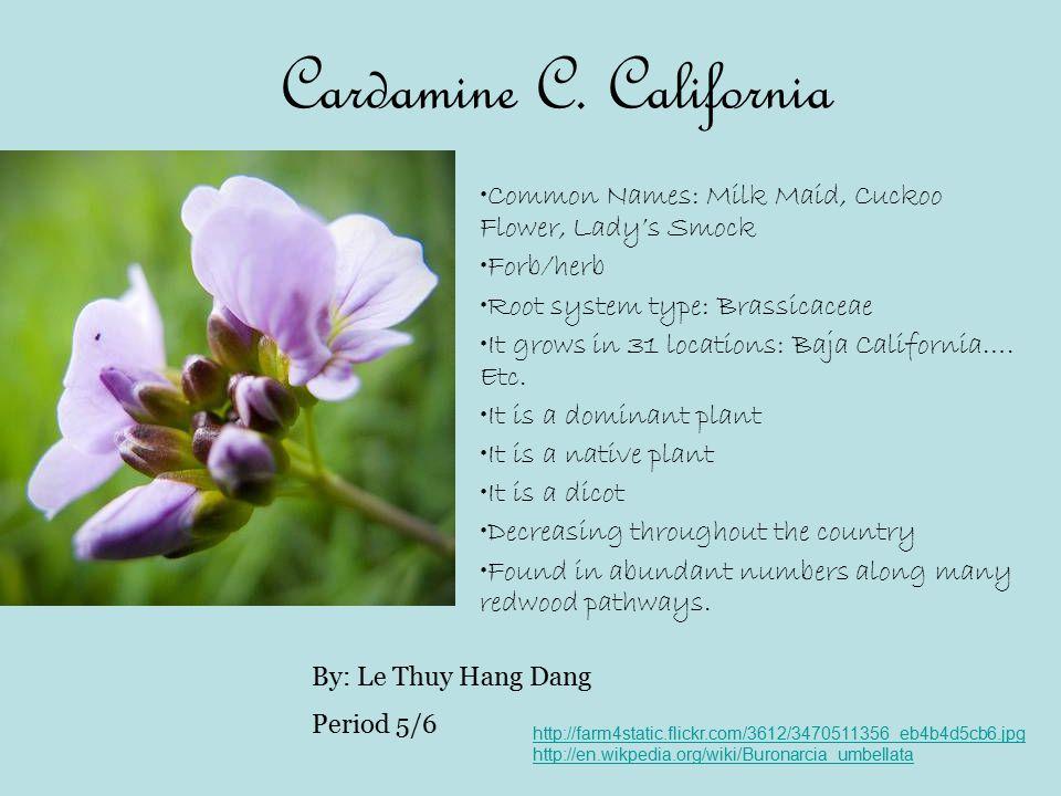 Cardamine C. California