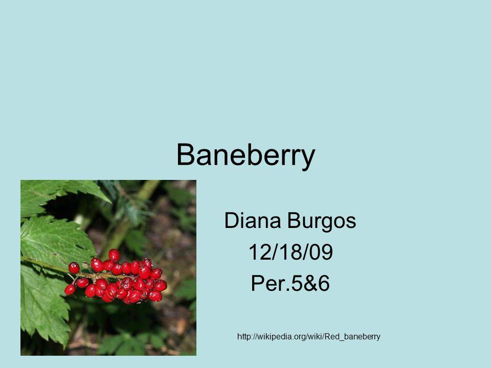 Baneberry Diana Burgos 12/18/09 Per.5&6