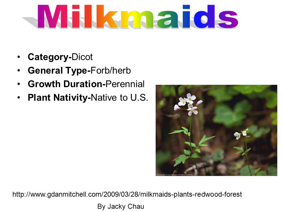 Milkmaids Category-Dicot General Type-Forb/herb