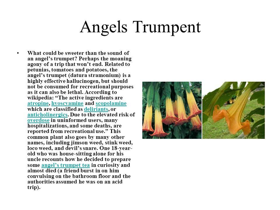 Angels Trumpent