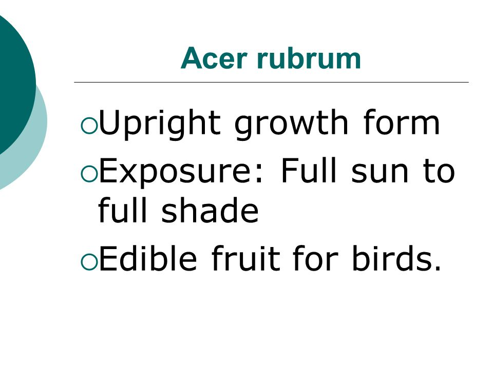 Exposure: Full sun to full shade Edible fruit for birds.