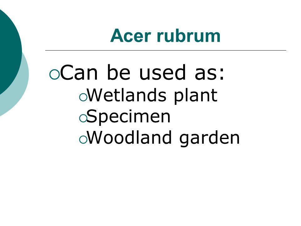 Acer rubrum Can be used as: Wetlands plant Specimen Woodland garden