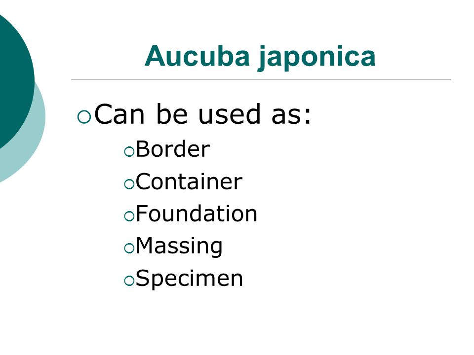 Aucuba japonica Can be used as: Border Container Foundation Massing