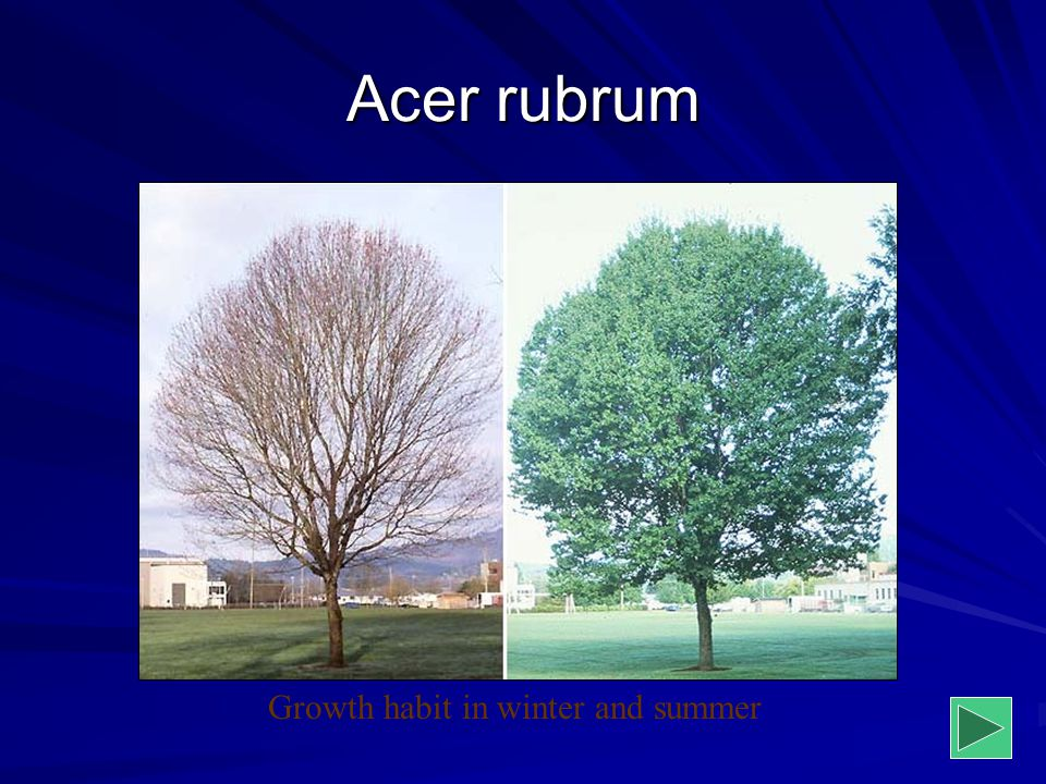 Growth habit in winter and summer