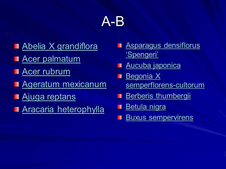 A-B Abelia X grandiflora Acer palmatum Acer rubrum Ageratum mexicanum